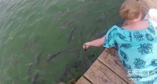 好惊悚!女子将手靠近水面喂鱼 下一幕让她后悔 吓得花容失色 - news.