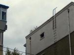 年久失修 不少居民楼顶都长树了 - News.365Jilin.Com