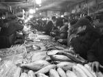 种类繁多的水产品吸引了市民的注意力。李子涵 摄 - 新浪吉林