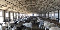 乾羊即将成为继黄小米后又一知名品牌推向全国 - 新浪吉林
