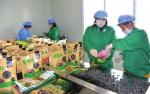 抚松长松绿色食品有限公司由返乡大学生创建,通过互联网销售山珍食品,带动当地特产业发展。 - 新浪吉林
