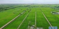吉林省好雨现代农业股份有限公司的一处水稻基地(资料图片) - 新浪吉林