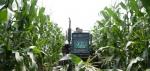 吉林农民正在收获鲜食玉米。新华社记者徐子恒摄 - 新浪吉林